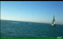 O balenă de 40 de tone
