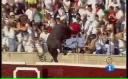 Un taur a sărit în tribune în timpul unei coride